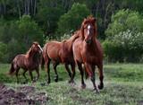 Fototapete Equine - Reiten - Nutztiere