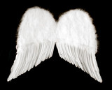 angel wings isolated on black poster