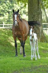 la jument et bébé