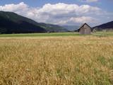 cereal crops in rural austria poster