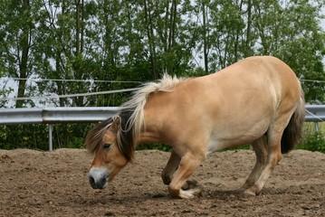 kneeling horse