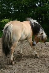 scratching horse
