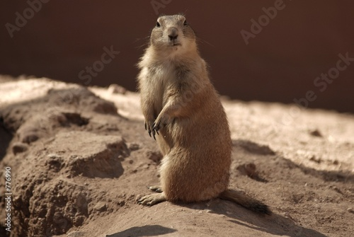 poster of prairie dog five