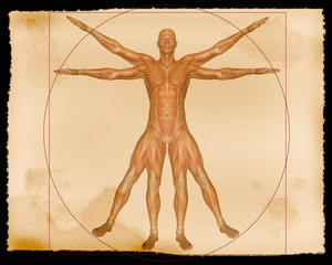 illustration - muscle man
