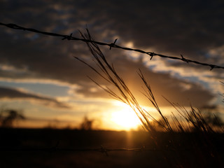 barbed sunset 2