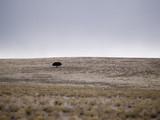 lone desert tree poster