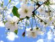 Leinwanddruck Bild - spring flowers