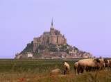 mont st michel france sheep poster