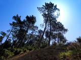 forêt de madère poster