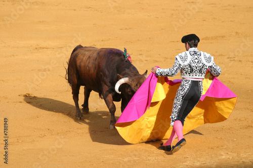 attacking bull. - 788949