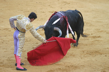 bullfighting in seville, spain.