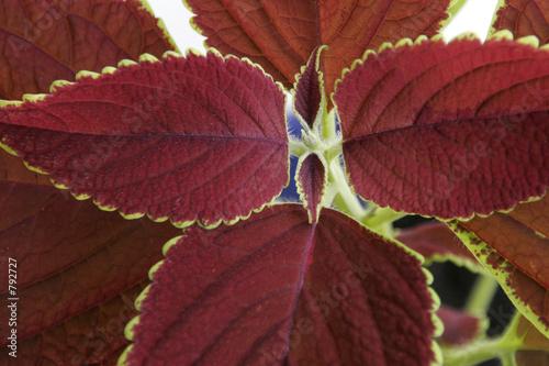 Feuilles de plante tropicales from christophe fouquin for Plante 5 feuilles