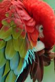 Fototapety   parrots