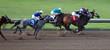 race horses - 809949