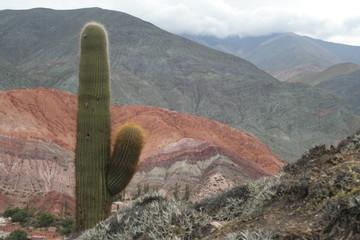 cactus en la montaña