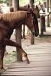 horse stomp
