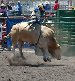 bull throwing rider poster