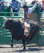 bull & rider