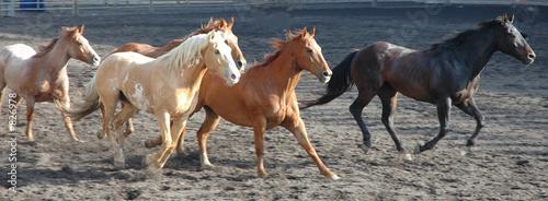Aluminium Paardrijden herd of horses