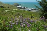 wildflowers, oregon coast poster