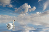 swan on a mysterious lake poster