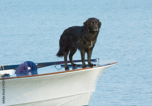 poster of water dog