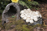 mushrooms and log poster