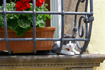 cat and flower pots