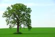 single tree summer