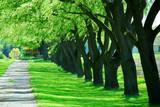 green tree lane poster