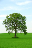 single tree poster
