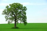 single tree summer poster