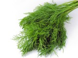 a tuft of green early dill poster