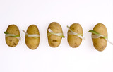 sushi like potatoes in line poster