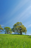 spring countryside poster