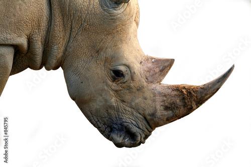 Fotobehang Neushoorn isolated rhinoceros head