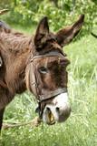 greek donkey poster