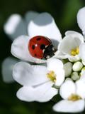 summer ladybird poster
