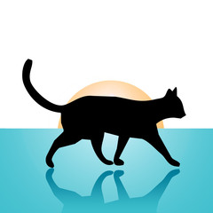 cat walking on a blue floor