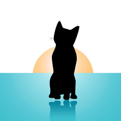 cat standing on a blue floor
