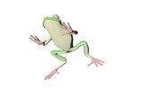 pencil frog four poster