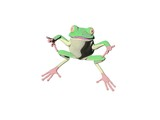 pencil frog five poster