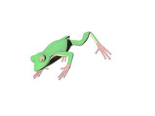 pencil frog