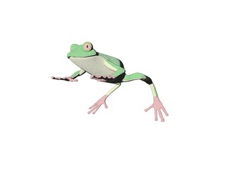 pencil frog three