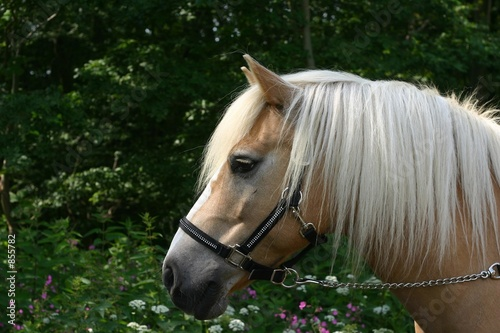 horse portrait with flowers