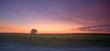 vineyard sunset - 856150