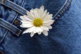 daisy in denim pocket poster