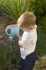 little boy watering herb garden