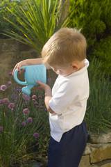 little boy watering herb garden