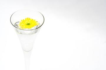 chrysanthemum in water